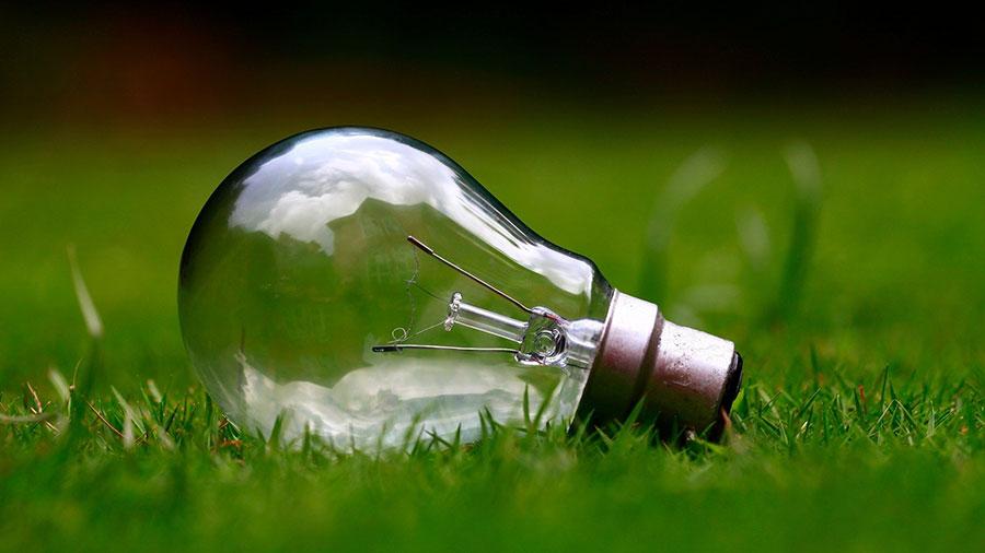 bulb on grass